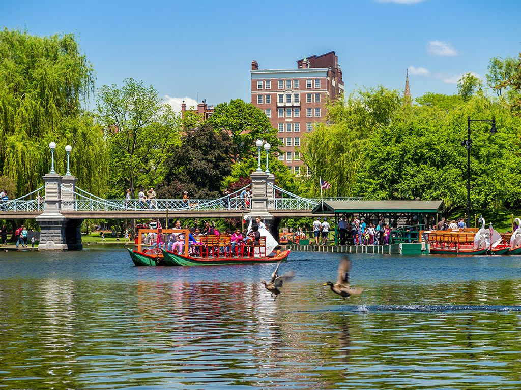 Boston Public Gardens Summer